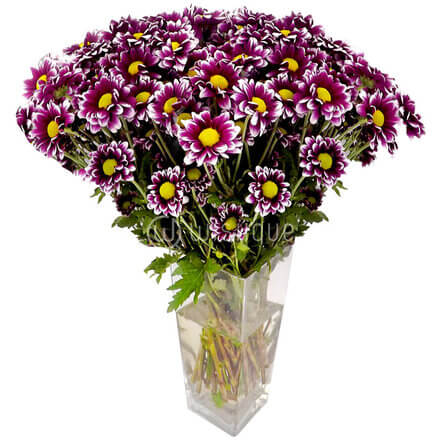 Azeri Chrysanthemums in a Glass Vase