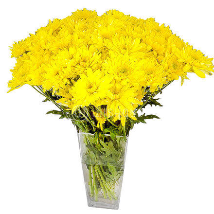 Yellow Arashi Chrysanthemums in a Glass Vase