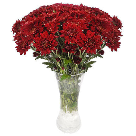 Arashi Chrysanthemums In A Glass Vase
