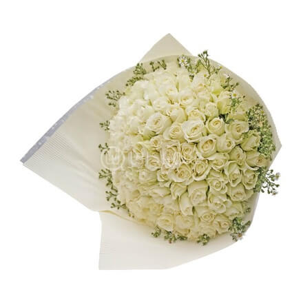 Bouquet of 100 White Roses