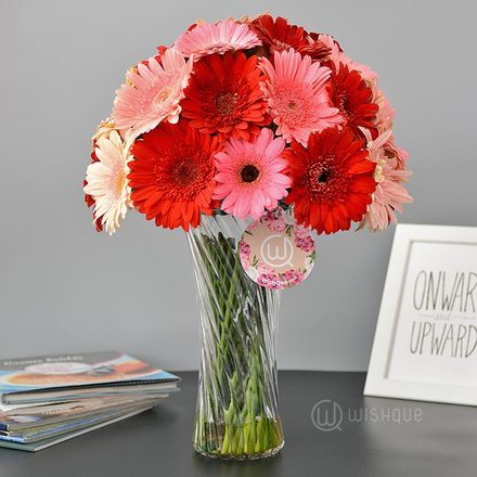 Shade Of Love Gerberas  Vase